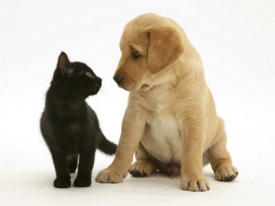 testez vous sur ce quiz chien ou chat dans le titre babelio. Black Bedroom Furniture Sets. Home Design Ideas