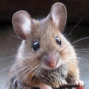 testez vous sur ce quiz les souris ne courent pas que dans l 39 herbe aussi dans les livres. Black Bedroom Furniture Sets. Home Design Ideas