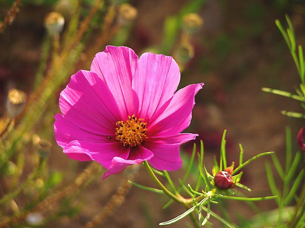 Des fleurs dans les titres liste de 28 livres babelio for Les fleur